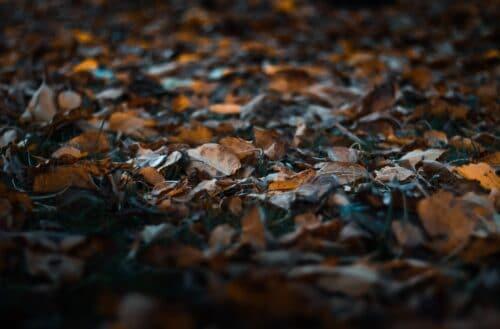 feuilles a composter