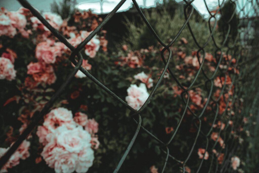jardin-cloture-grillagee