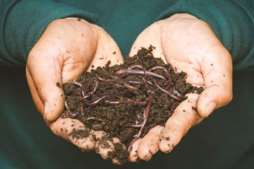 déchets-organiques-compost